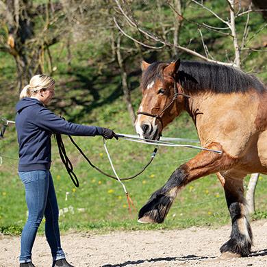 Pferd macht spanischen Gruß
