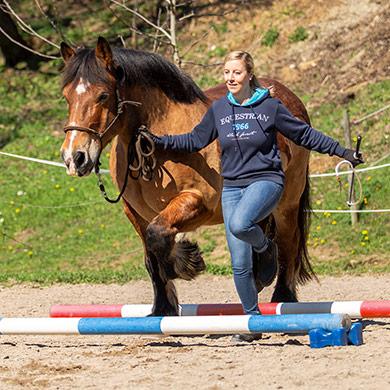 Pferd trabt über Stangen