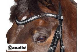 Cavallo Trensen