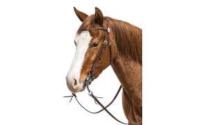 Western-Ponys