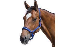 Cheval de Luxe für Pferde