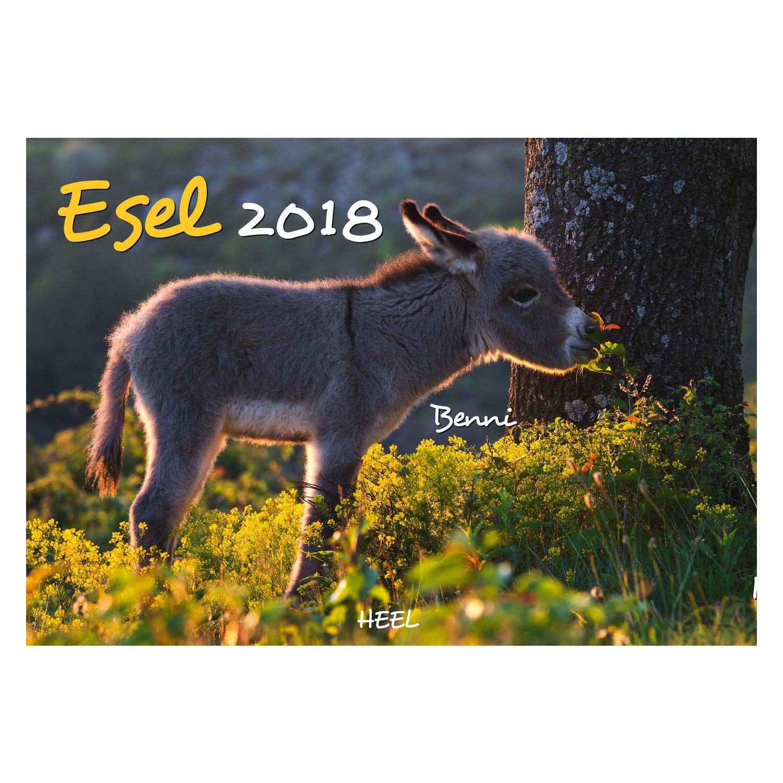 Kalender Esel