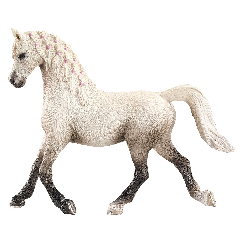 Ziemlich Pferd Reproduktive Anatomie Fotos - Anatomie Ideen ...
