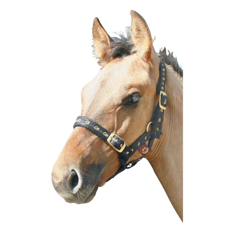 Loesdau Fohlen-Nylonhalfter, mit Pferdemotiv