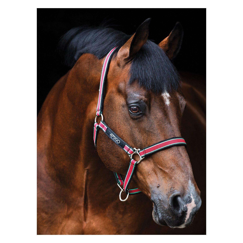 Horseware AMIGO Halfter Headcollar