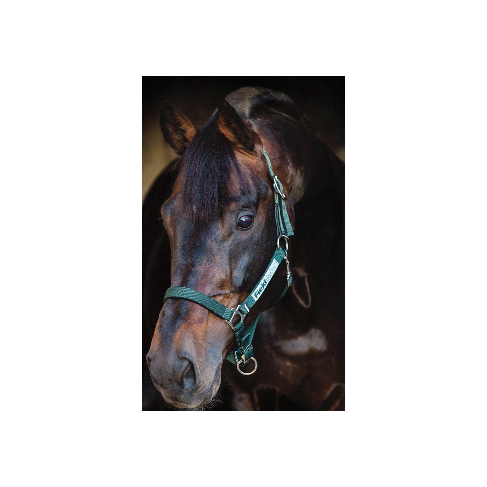 Horseware Halfter Fieldsafe