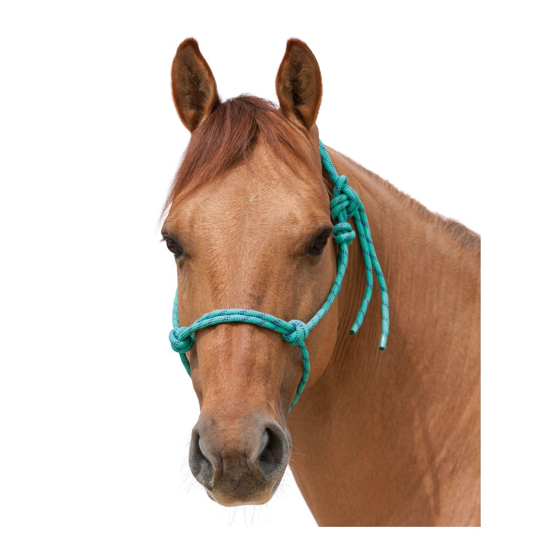 L-pro West Knotenhalfter Honolulu türkis | Pony
