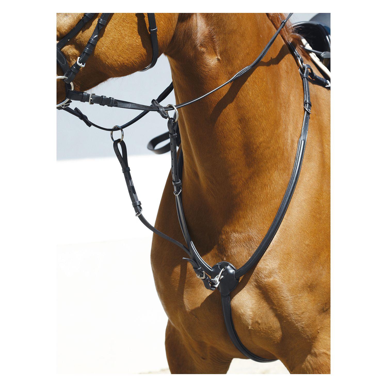 Passion Pferdesport