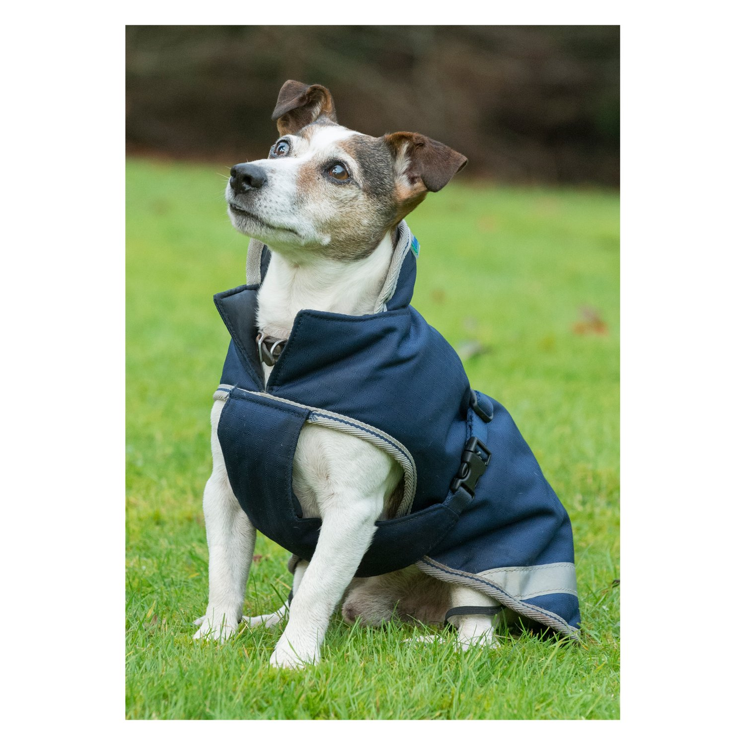 bucas Hundemantel Dog Rug Freedom 50 g navy | 60 cm