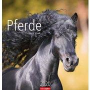 Kalender Pferde 2020