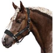 Horse-friends Fleecehalfter San Diego