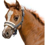 Fohlenhalfter Horses