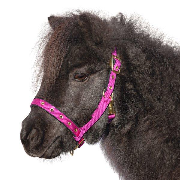 Loesdau Fohlen- und Pony-Nylonhalfter