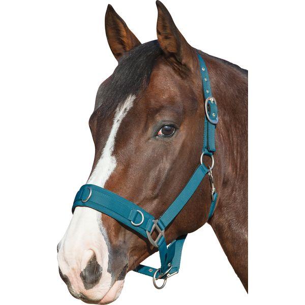 Horse-friends Longier- und Stallhalfter petrol | Vollblut