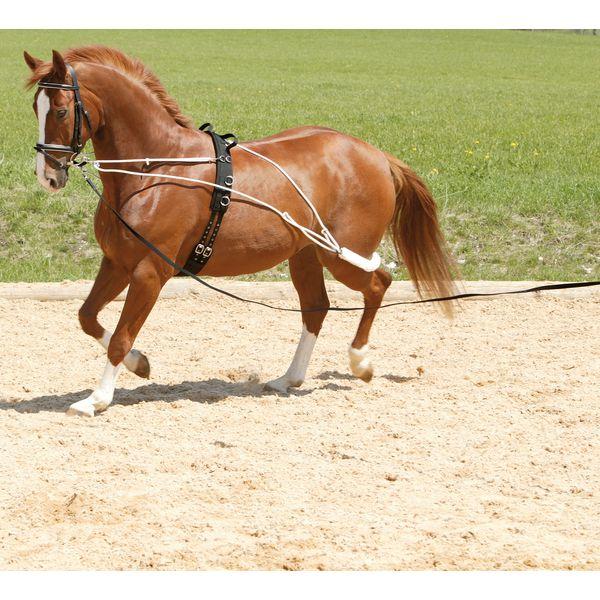 Horse-friends Longiersystem