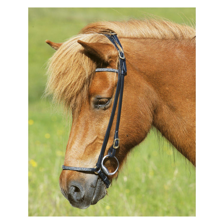Islandpferde-Reittrense Elding